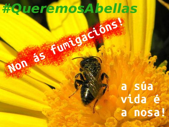 #QueremosAbellas - Se as matan a elas, mátannos a todos!