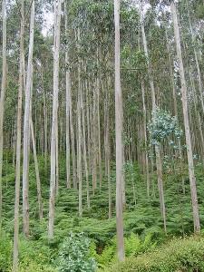 Véspera de Nada lamenta fondamente a aprobación dunha proposición non de Lei que daría luz verde aos cultivos enerxéticos