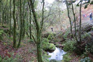 Coluna San Fins e Verdegaia propoñen «amadriñar» un bosque autóctono en Froxán