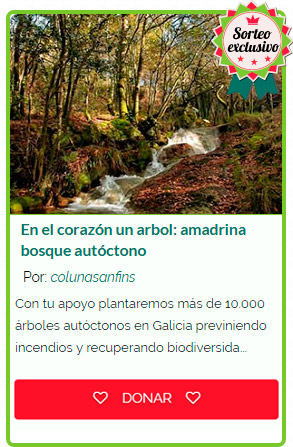 No corazón unha árbore. Amadriña #oTeuBosque