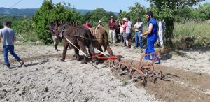 Crónica do curso de tracción animal en Meire (Allariz)
